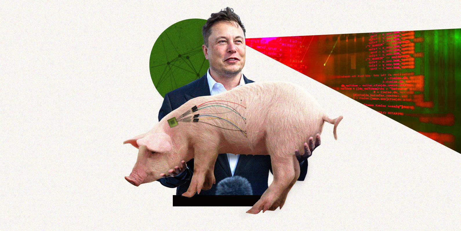 Os chips cerebrais de Elon Musk são a nova era da biotecnologia?