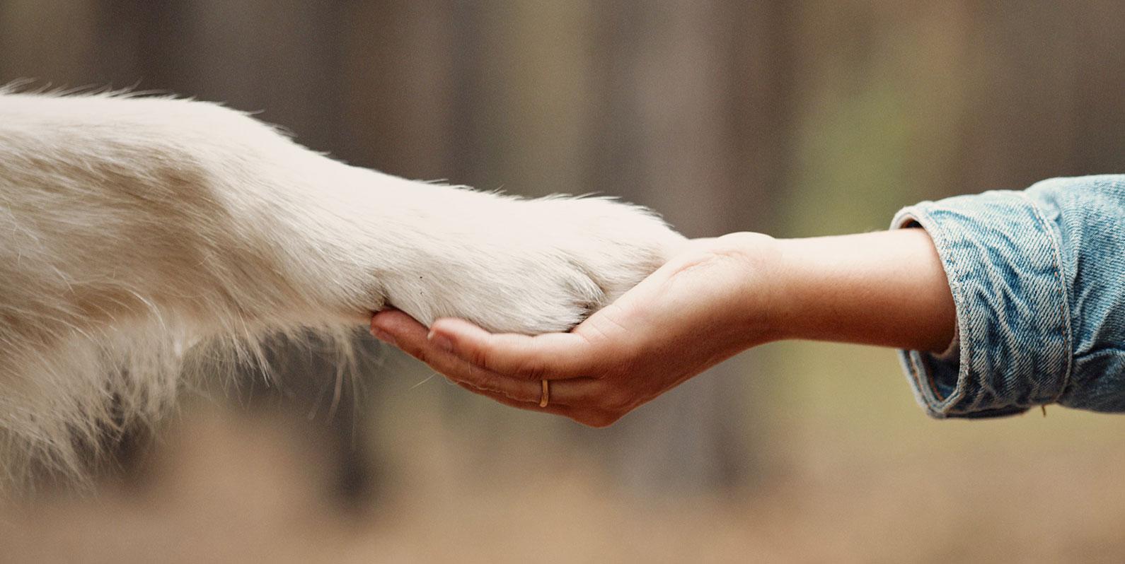 O convívio com cães resgata a empatia ancestral que nos tornou humanos